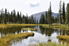 Wild Basin area, Rocky Mountain National Park